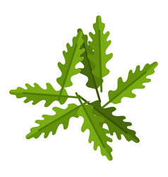 heap arugula leaves flat icon isolated vector image