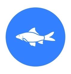 Red Tail Shark fish icon black Singe aquarium vector