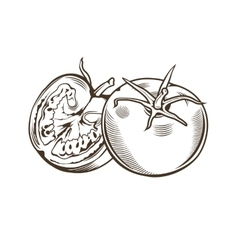 Tomatoes in vintage style Line art vector image