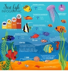 Sea life animals plants infographic vector