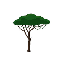 Acacia tree in cartoon style vector