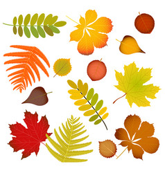 autumn leaves set isolated vector image