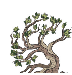 Bonsai tree isolated vector