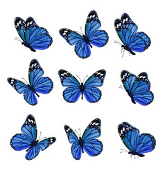colored butterflies flying beautiful insects vector image