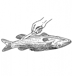 cooking fish vector image