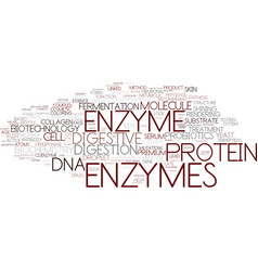 Enzymes word cloud concept vector