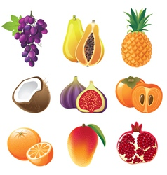 highly detailed fruits icons set vector image vector image
