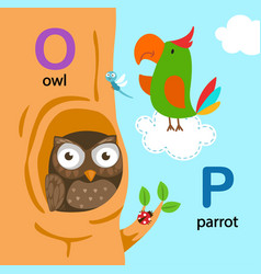 isolated alphabet letter o-owl p-parrot vector image