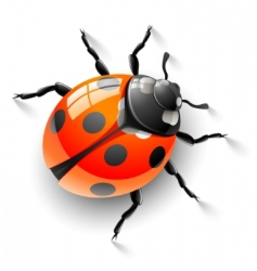 Red ladybird vector