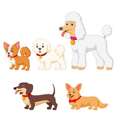 Set collection of different kind of dogs vector