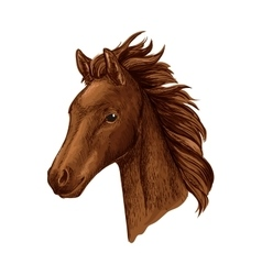 Brown mare horse head sketch with arabian filly vector image vector image