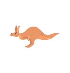 Cute brown kangaroo wallaby australian animal vector