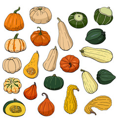 Hand drawn squash set autumn collection of vector