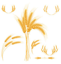 ripe ears wheat set isolated detailed template vector image