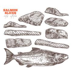 salmon slices hand drawn set vector image