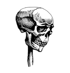 Skull is wearing a wooden stake vector