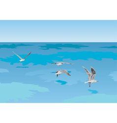 seagulls over sea vector image vector image