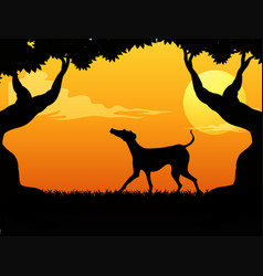 silhouette scene with dog in the park at sunset vector image vector image