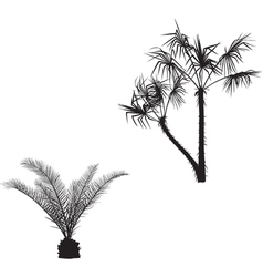 with palm silhouettes vector image