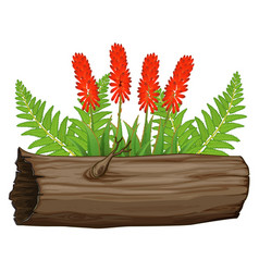 Aloe vera flowers and wooden log on white vector
