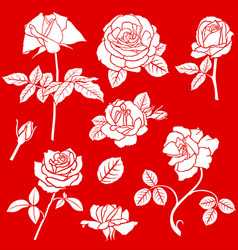 decorative rose flower set vector image