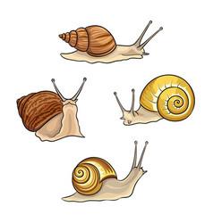 set snails vector image