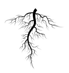 Tree underground roots set vector