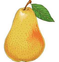 ripe yellow pear vector image