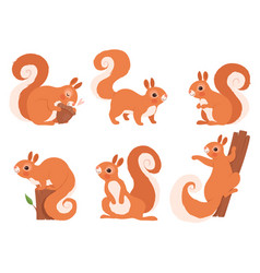 cute squirrel zoo little forest animals in action vector image