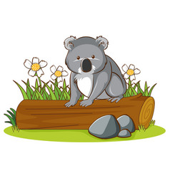 isolated picture koala on log vector image