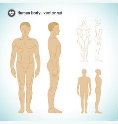 male body set vector image