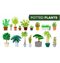 potted plants set indoor home office vector image