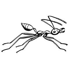 Ant oecophylla vector