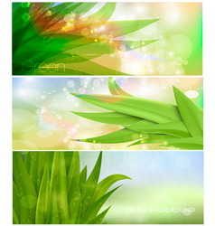 grass nature banner for facebook design vector image