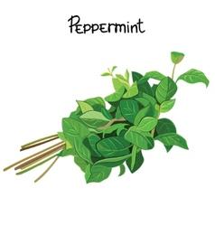 Peppermint vector