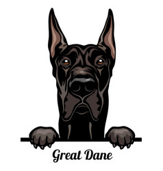 great dane - color peeking dogs - breed face head vector image