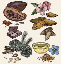 Set food and cosmetic care ingredients vector