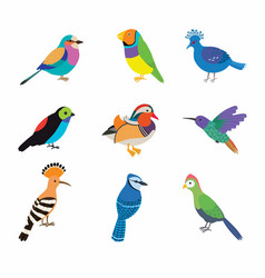 Set most beautiful birds on planet vector