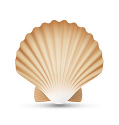 Scallop seashell realistic sea shell close vector