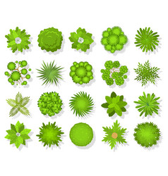 Top view trees and bushes aerial landscape vector
