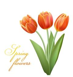 realistic tulips vector image