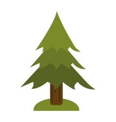 pine tree forest camping icon vector image
