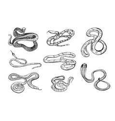 set of various snake viper cobra and other black vector image
