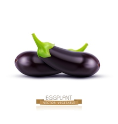 eggplant isolated on white background vector image