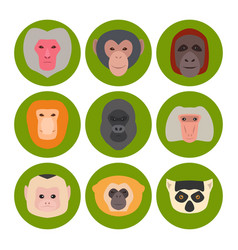 Monkey character animal different breads wild zoo vector