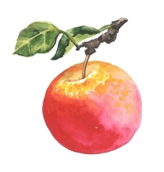 Watercolor apple with leaf vector
