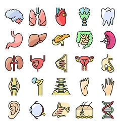 icons set with human organs vector image vector image