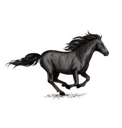 black horse running on racing sport vector image vector image
