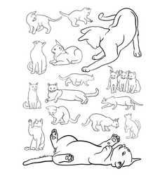 cat animal line art vector image
