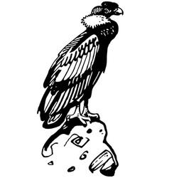 Condor bird vector